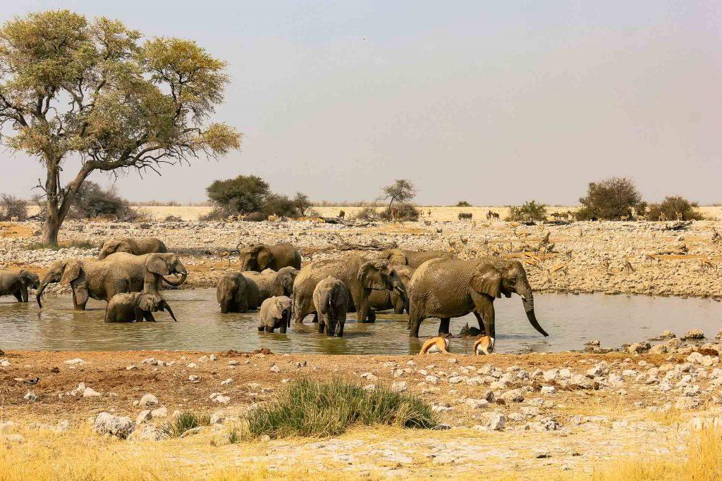 Nationalparkfahrt Etosha